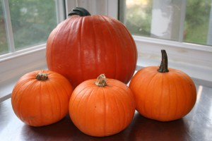 Sugar Pumpkins are Smaller than Carving Pumpkins