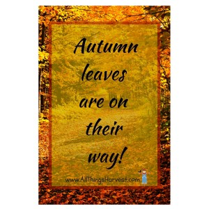 Autumn leaves are on their way!